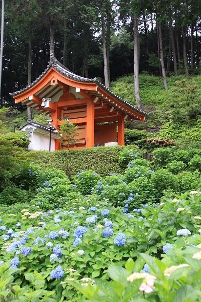 2011三室戸寺の紫陽花 054.JPG
