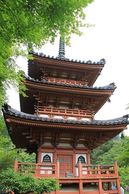 2011三室戸寺の紫陽花 186.JPG